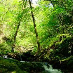 Bosque-Eume