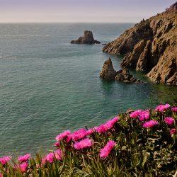 Ferrol Campello